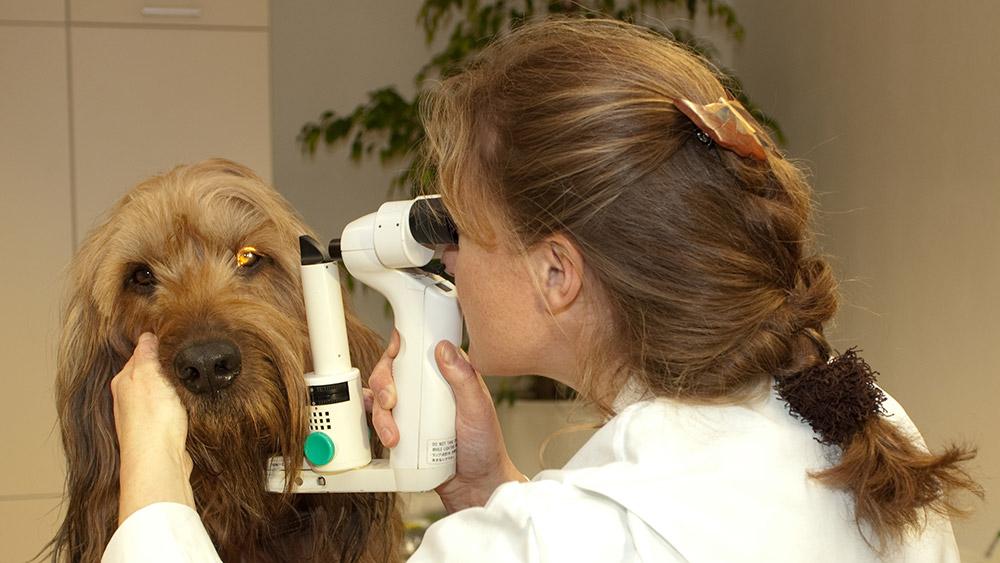 Frau Dr. Küfner ist die einzige Tierärztin in der Region, die die Zusatzbezeichnung Augenheilkunde führen darf.