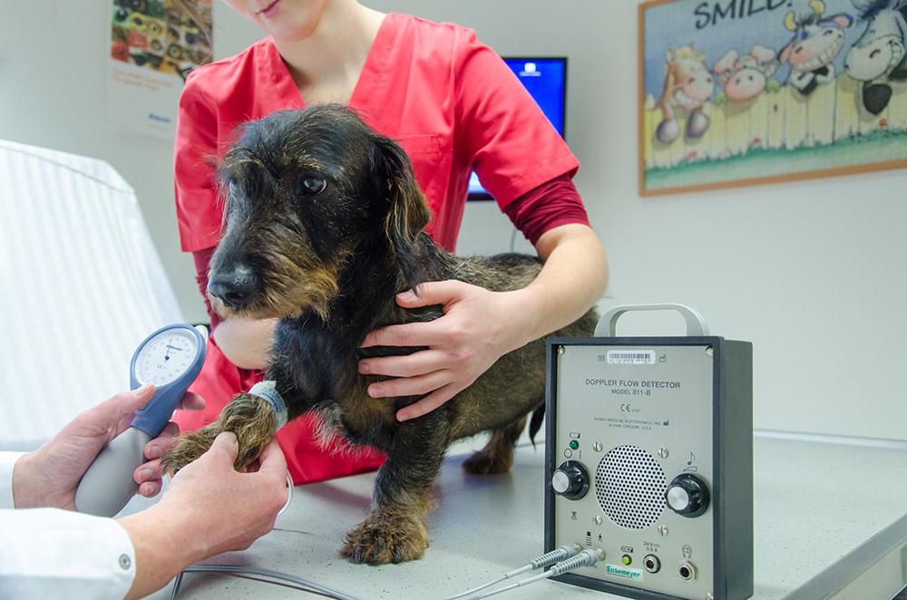 Tierarzt-Praxis VET-Center in Gräfenthal bei Bayreuth